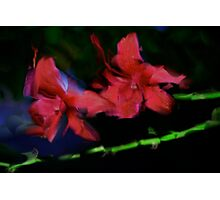 val flowers Photographic Print