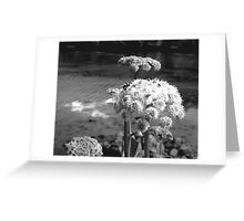 Bee on Coastal Flowers in Black and White Greeting Card