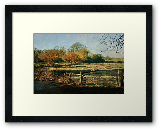 Powderham by Catherine Hamilton-Veal  ©