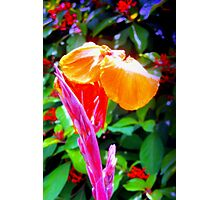 Flower spike and bloom Photographic Print