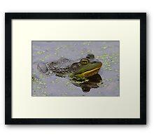 American Bullfrog Framed Print