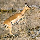 Leaping Impala by Michael  Moss
