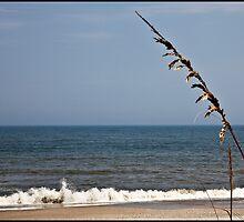 Beach Scene by mimsjodi