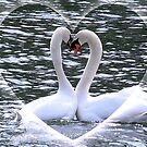 Swan Valentine by AnnDixon