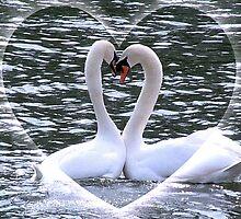 Swan Valentine by AnnDixon