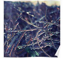 Icy Elm Hedge Poster