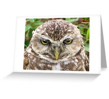 Owl, Florianopolis, Brazil Greeting Card