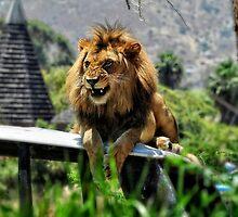 The New Lion in San Diego by AlexThomson