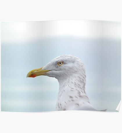 Is this so Gull a bill Poster
