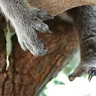 Koala claws by Michelle *