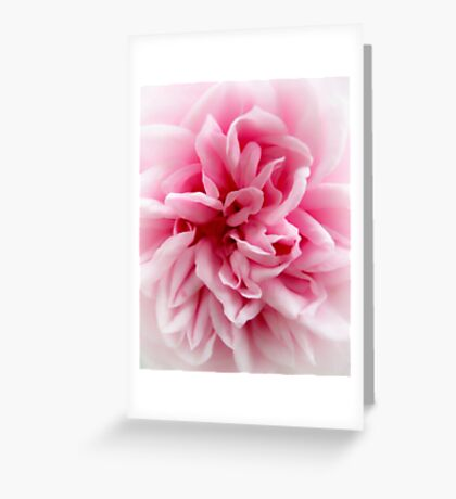 Palest of Pink. Greeting Card