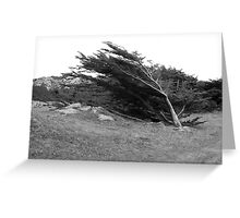 Wind Blown Leaning Tree Greeting Card