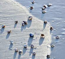 Sea Shells at the Beach by Amy McDaniel