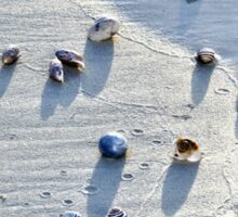 Sea Shells at the Beach Sticker