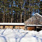 Barn in the Forest by smalletphotos