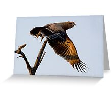Tawny Eagle In Flight Greeting Card