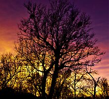 Sunset Oak - Sedona  by Melissa Seaback