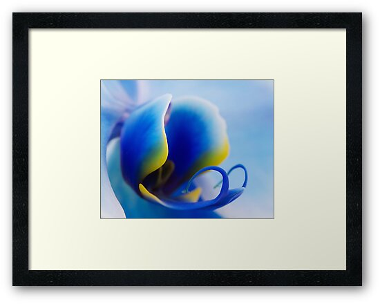Blue Orchid by Margaret Barry