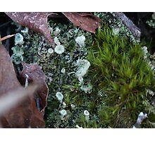 Tiny World Photographic Print