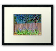 Irises in the backyard Framed Print