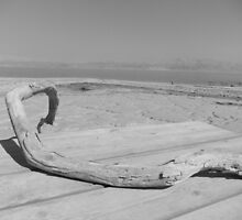 Branch with Dead Sea in Background by Adam Isaacson