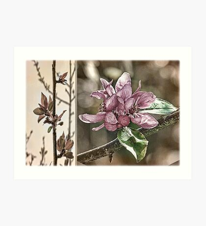 Crabapple Tree Diptych Art Print
