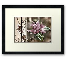 Crabapple Tree Diptych Framed Print