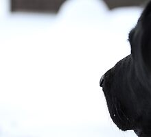 "Black Dog Snow White by Christine ""Xine"" Segalas"