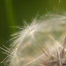 Dandelion Series; 1 by Tyhe  Reading