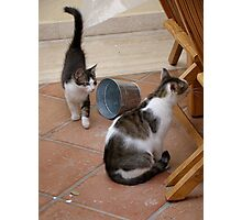 Curiousity Comes in Twos Photographic Print