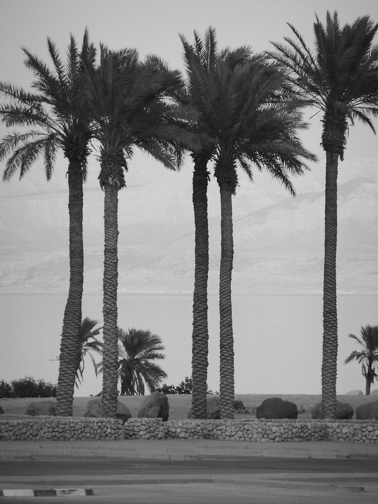 Palm Trees by Adam Isaacson