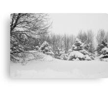 Winter scape Canvas Print