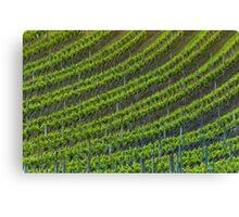 Vineyard 6 Canvas Print