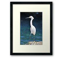 White Bird Against Blue Water Framed Print