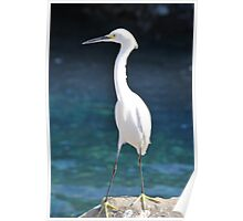 White Bird Against Blue Water Poster
