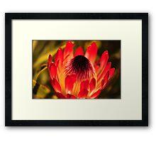 Flower on fire Framed Print