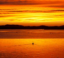 Pelican sunset - Forster / Tuncurry Lakes by iamwillcreative