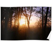Misty Dawn - Forster, Australia Poster