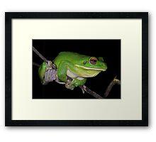 White-lipped Tree Frog Profile Framed Print