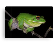 White-lipped Tree Frog Profile Canvas Print