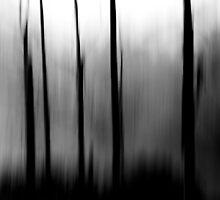 Upcountry Fog by Zach Pezzillo