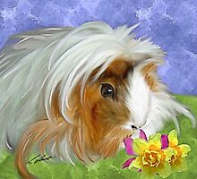 Guinea Pig .. by Cazzie Cathcart