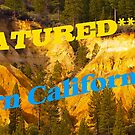 Northern California Styles Banner by the57man