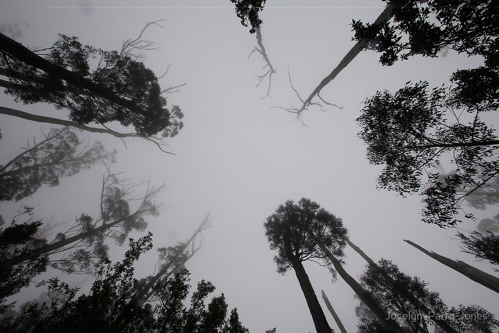 Looking up to trees by Jocelyn  Parry-Jones