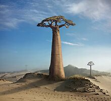 Land of the Baobabs by KLIMAS