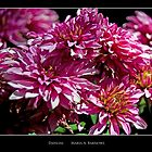 Dahlias - - Posters & More by Maria A. Barnowl