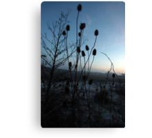 loads of thistles Canvas Print