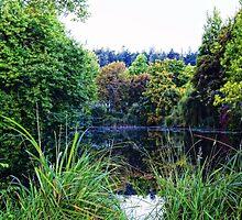 Ponderous Pond by James Zickmantel