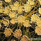 Dainty - In Pale Orange-Yellow by Deb  Badt-Covell