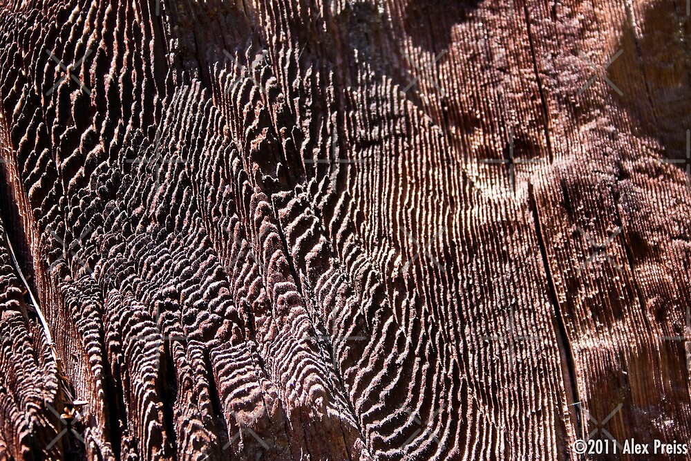 "General Noble Tree - ""Chicago Stump"" Detail 2 by Alex Preiss"